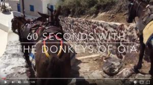48 Donkeys in Oia